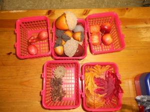 Students have sorted acorns, pumpkins, leaves, squash, and pinecones.
