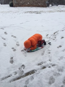 A beach boogie board makes a good sled!